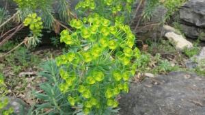 cheekwoodbrightgreenplant.jpg